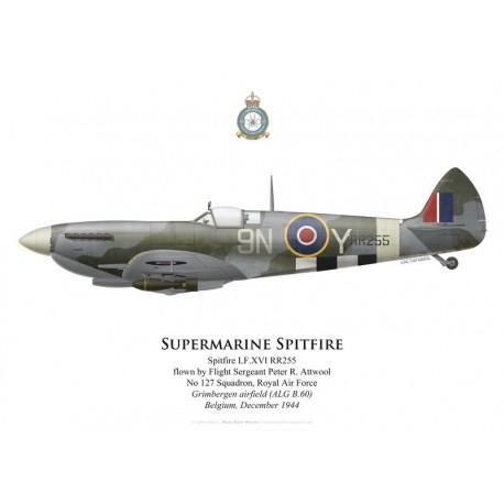 Spitfire Mk XVI, F/S Peter Attwool, No 127 Squadron, Royal Air Force, Grimbergen, Belgique, décembre 1944