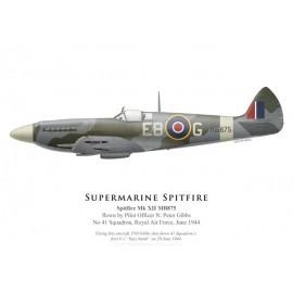 Spitfire Mk XII, P/O N. Peter Gibbs, No 41 Squadron, Royal Air Force, juin 1944